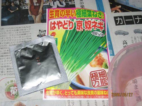 1ネギの水耕栽培に挑戦_20060827-1